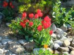 spring in casalfiume