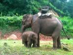 Elephants and elephant trekking