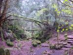 Puzzlewood (local beauty spot)
