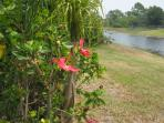 View of Hibiscus and Along the Canal