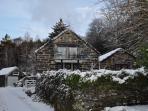 Blue Peris in Winter