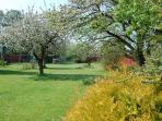 Our Garden - Spring time