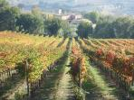 Vineyards of Montefalco, home of Sagrantino wine