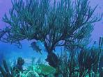 Port Bonaire hose  reef and his habitants