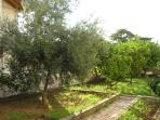 Garden with tangerine and lemon trees- help yourself