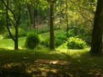 The Oak Tree swing in the woods