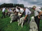 The Eskdale show - an annual event with fell running, sheep shearing and highland wrestling!