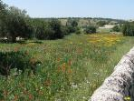 Spring meadows along the road between Modica and Noto