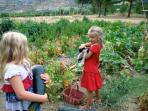 the vegetable garden with its 'young farmer' (... and a poor cat !)