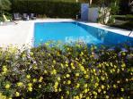 Swimming pool 10m x 5m