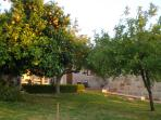 The garden: there are apple, orange and lemon trees.  Good size and secure with a tall wall around.