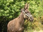 Donkey-Nush