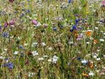 Flowers in the Surrounding Fields