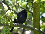 Birds love the garden