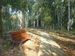 Ten minute walk to the beach through the eucalyptus forest.