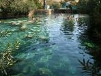 Cleopatra Springs
