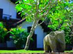 Galle Henna Estate - Book Whole Villa or By Room
