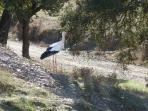 Cheeky Stork!