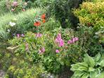 Flower Border in Garden