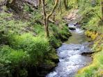 Stunning forest walks