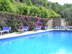 The landscaped pool with luxury sun loungers.