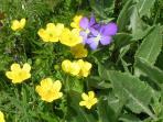 La nostra flora