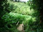 a farmers 'garden'