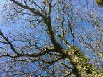 Enjoy woodland walks under ancient elms