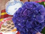 fiori sul tavolo della colazione