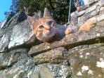Tipico muro in pietra con gattone alla...finestra!