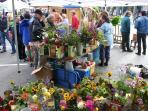 Saturday Market