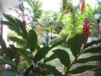 tropical Garden Lagoon Villa Beruwala