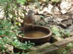 a visitor at the bird bath!