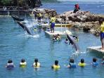 Near By Attractions - Dolphin Cove