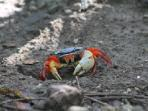 Colorful Crab!