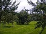 The Orchard - Scrump away - 1 of your 5 a day