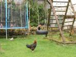 trampoline and playarea. Free range chickens!