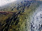 Salmon swimming upstream to spawn on Kalgin Island