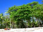 The beach at Playa Carmen