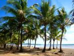 Playa Carmen palm trees