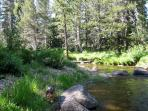 Upper Truckee river, 5 min walk