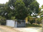 Entrance w/gate to Mango House w/ Mango trees on each side.