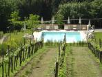 Our Pool at the edge of our vineyard
