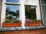 Window boxes with Lavender flowers