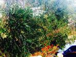 garten & grove view