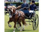 Royal Welsh Show  Llanelwedd, Builth Wells, in July. Aberaeron holds  Welsh Cob festival in August