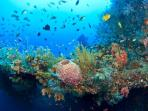 Plongées sous marine