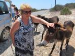 wild donkeys karpaz