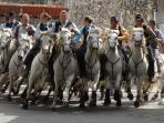 Camargue horses and bulls at Saint Chaptes village festival