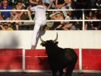 Local bull games take place in every village festival. Camargue bulls can be followed as real stars